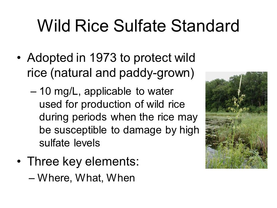 Wild Rice Sulfate Standard Adopted in 1973 to protect wild rice (natural and paddy-grown) –10 mg/L, applicable to water used for production of wild rice during periods when the rice may be susceptible to damage by high sulfate levels Three key elements: –Where, What, When