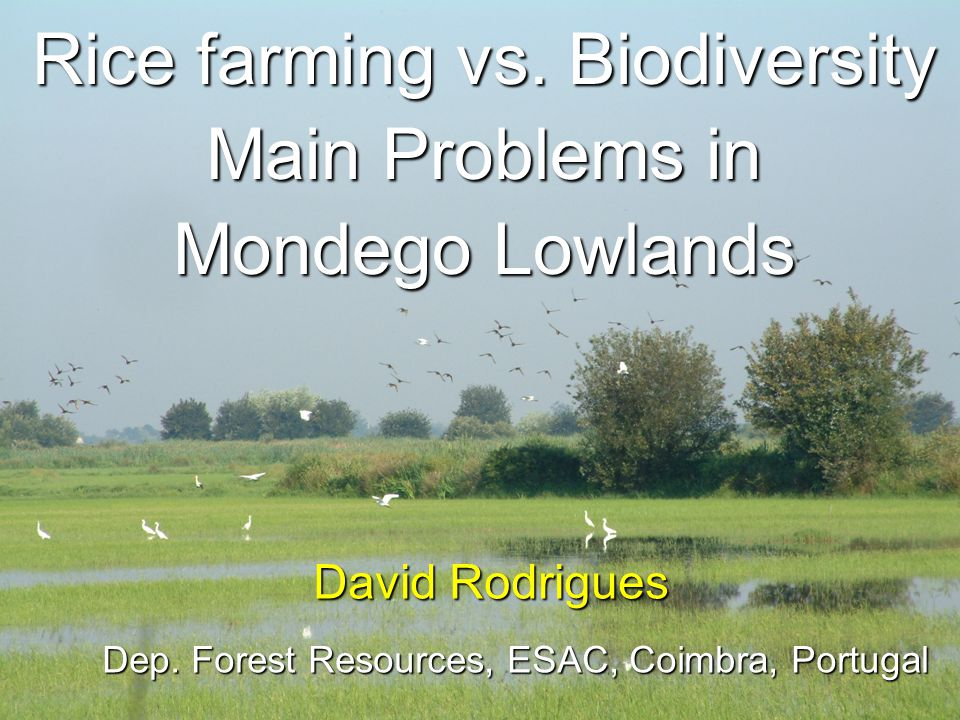 Rice farming vs.Biodiversity Main Problems in Mondego Lowlands David Rodrigues Dep.
