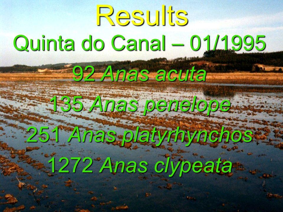 Quinta do Canal – 01/1995 92 Anas acuta 135 Anas penelope 251 Anas platyrhynchos 1272 Anas clypeata Results