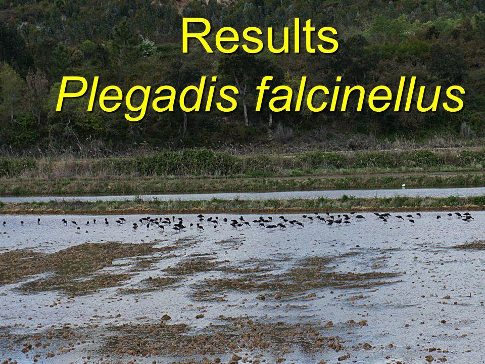 Results Plegadis falcinellus