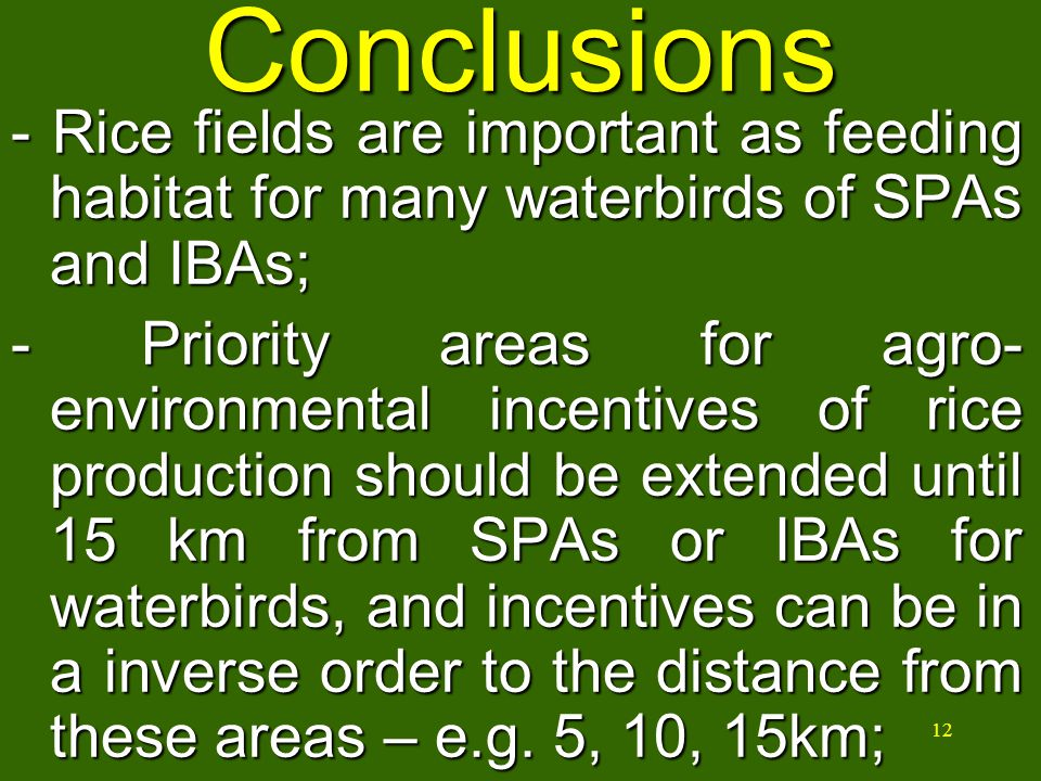 12 Conclusions - Rice fields are important as feeding habitat for many waterbirds of SPAs and IBAs; - Priority areas for agro- environmental incentives of rice production should be extended until 15 km from SPAs or IBAs for waterbirds, and incentives can be in a inverse order to the distance from these areas – e.g.