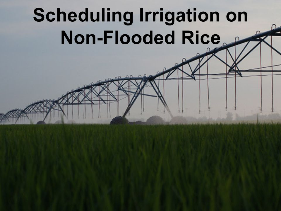 Scheduling Irrigation on Non-Flooded Rice