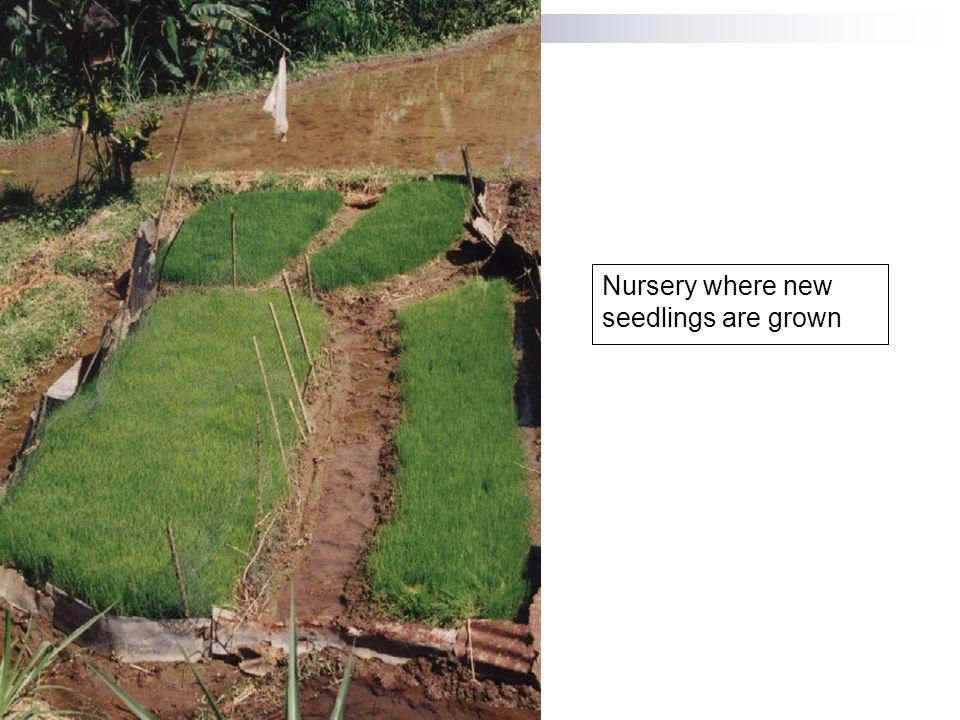 Nursery where new seedlings are grown