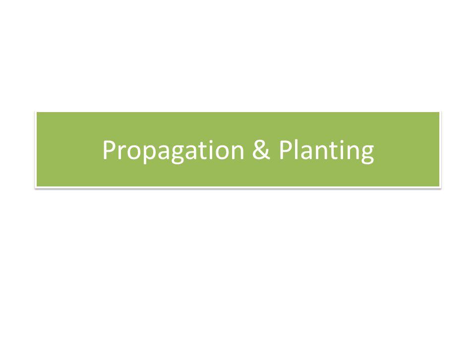 Propagation & Planting