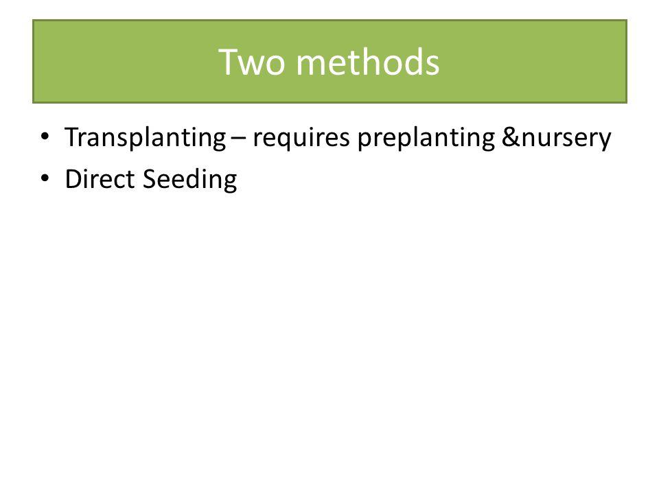 Two methods Transplanting – requires preplanting &nursery Direct Seeding