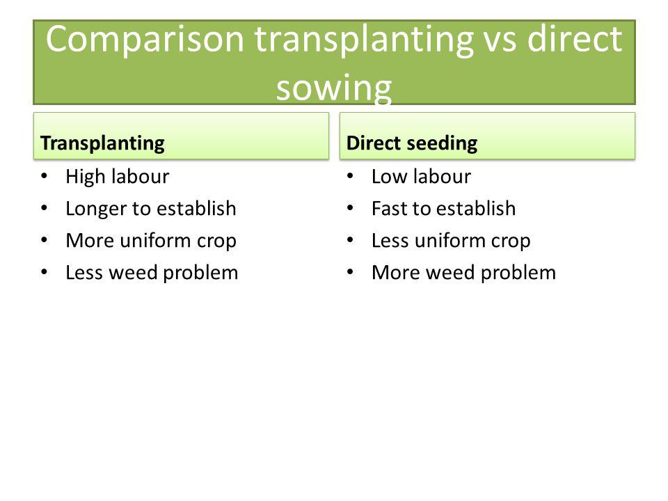 Comparison transplanting vs direct sowing Transplanting High labour Longer to establish More uniform crop Less weed problem Direct seeding Low labour
