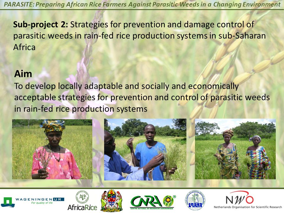 PARASITE: Preparing African Rice Farmers Against Parasitic Weeds in a Changing Environment Sub-project 2: Strategies for prevention and damage control of parasitic weeds in rain-fed rice production systems in sub-Saharan Africa Aim To develop locally adaptable and socially and economically acceptable strategies for prevention and control of parasitic weeds in rain-fed rice production systems