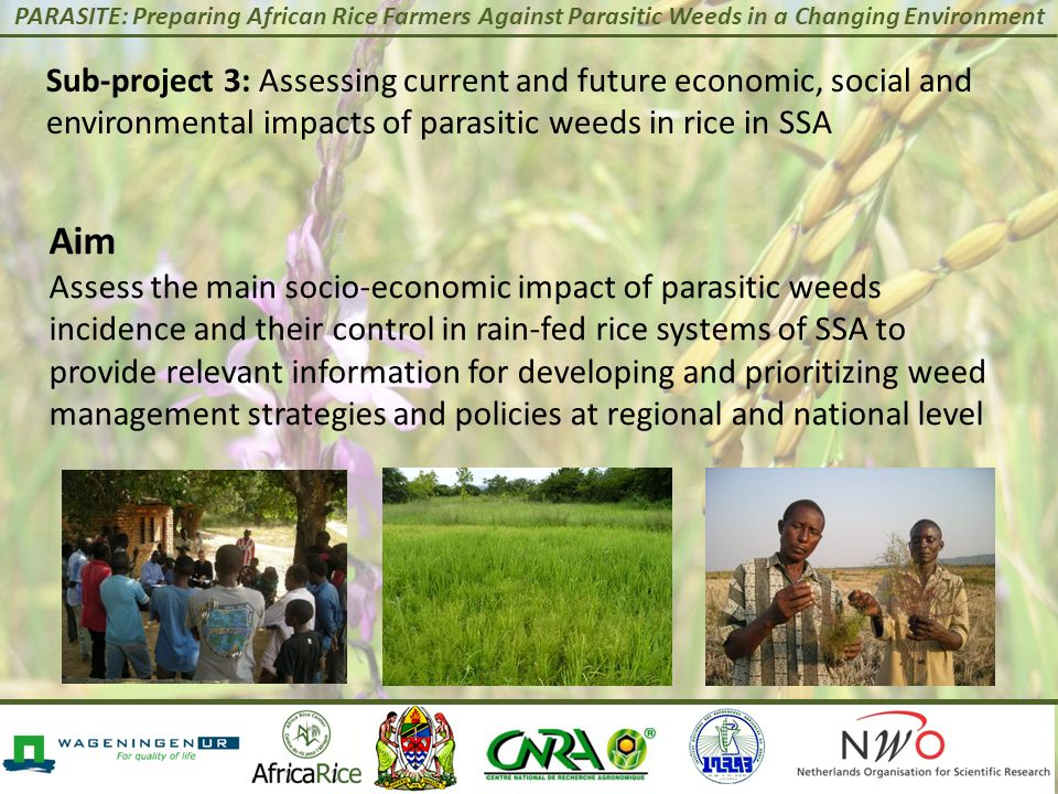 PARASITE: Preparing African Rice Farmers Against Parasitic Weeds in a Changing Environment Sub-project 3: Assessing current and future economic, socia
