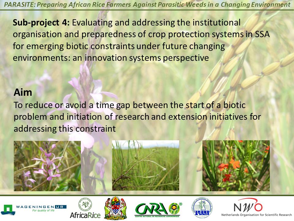 PARASITE: Preparing African Rice Farmers Against Parasitic Weeds in a Changing Environment Sub-project 4: Evaluating and addressing the institutional organisation and preparedness of crop protection systems in SSA for emerging biotic constraints under future changing environments: an innovation systems perspective Aim To reduce or avoid a time gap between the start of a biotic problem and initiation of research and extension initiatives for addressing this constraint