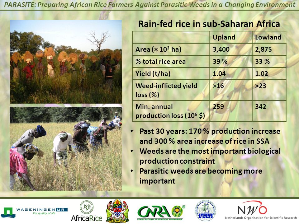 PARASITE: Preparing African Rice Farmers Against Parasitic Weeds in a Changing Environment Rain-fed rice in sub-Saharan Africa UplandLowland Area (× 10 3 ha)3,4002,875 % total rice area39 %33 % Yield (t/ha)1.041.02 Weed-inflicted yield loss (%) >16>23 Min.