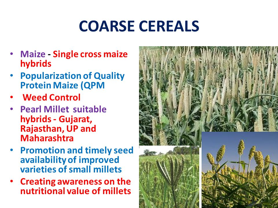 COARSE CEREALS Maize - Single cross maize hybrids Popularization of Quality Protein Maize (QPM Weed Control Pearl Millet suitable hybrids - Gujarat, R