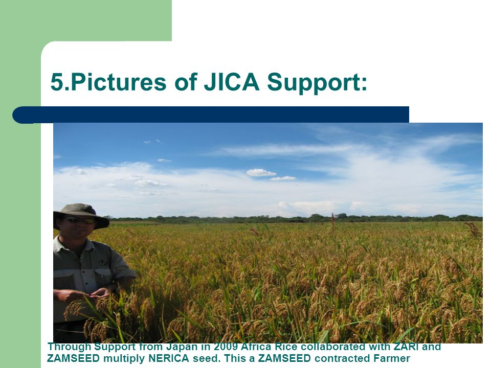 5.Pictures of JICA Support: Through Support from Japan in 2009 Africa Rice collaborated with ZARI and ZAMSEED multiply NERICA seed.
