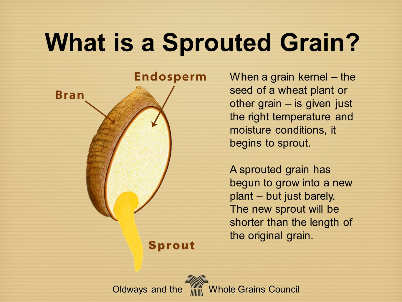 Unlocking a Grain's Nutrients Oldways and the Whole Grains Council Sprouting grains causes many changes including: Complex molecules become simpler and easier to digest Vitamin C increases Folate increases Antioxidants increase Insoluble fiber decreases Soluble fiber increases Gluten decreases … and more!