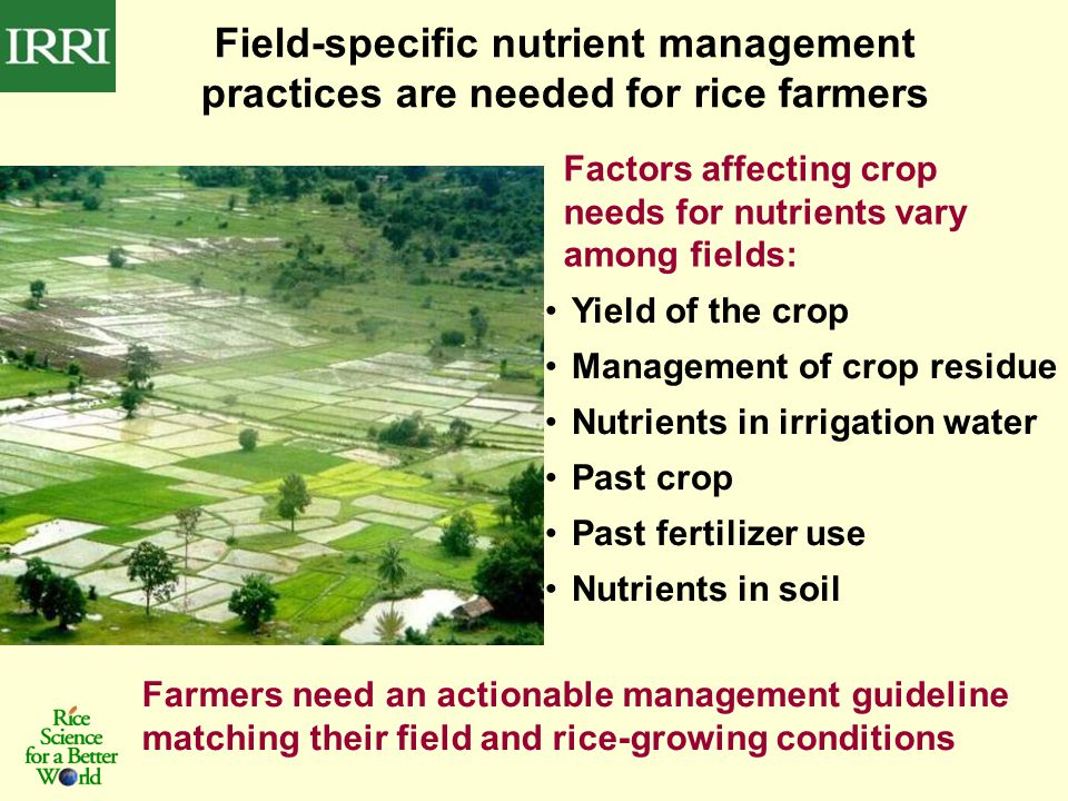 Factors affecting crop needs for nutrients vary among fields: Field-specific nutrient management practices are needed for rice farmers Farmers need an actionable management guideline matching their field and rice-growing conditions Yield of the crop Management of crop residue Nutrients in irrigation water Past crop Past fertilizer use Nutrients in soil