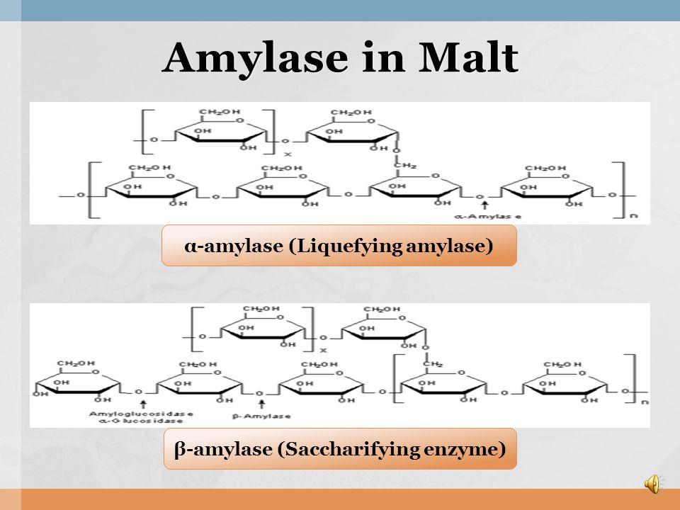 Component of Malt Component of Malt  AmylaseProtease,  Amylase, Protease, Invertase, Phytase, Phospholipid, Dextrin, Maltose, Glucose, Gramine, Vit B, Fat