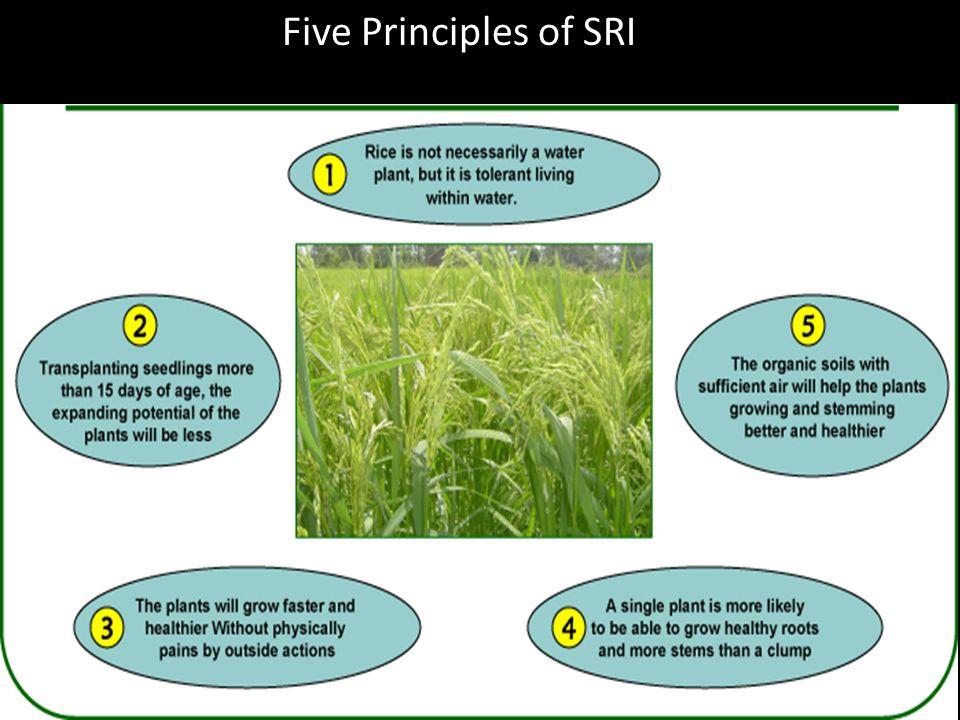 Five Principles of SRI