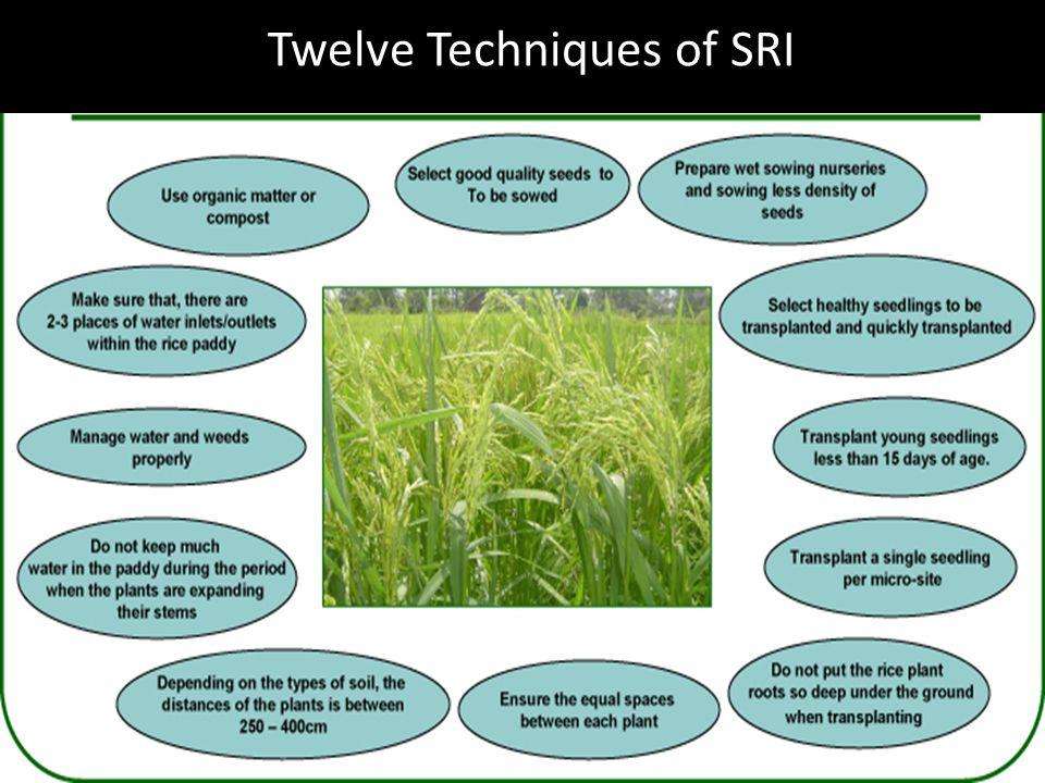 Twelve Techniques of SRI