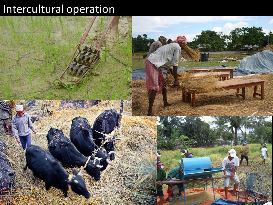 Intercultural operation