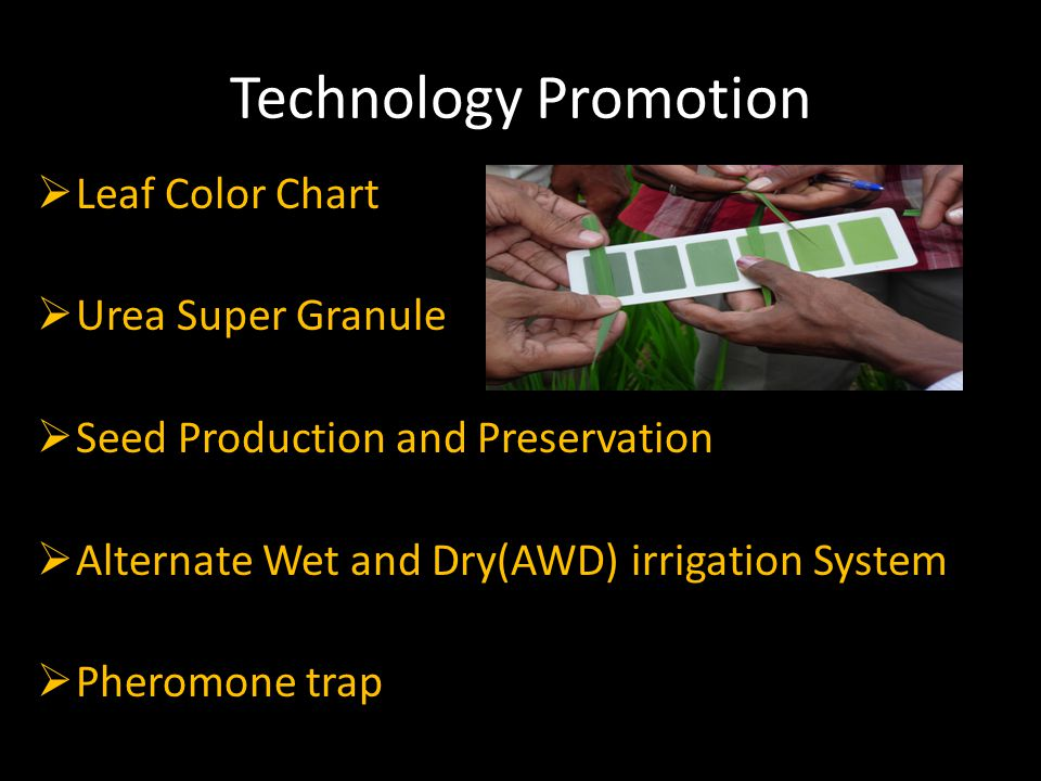 Technology Promotion  Leaf Color Chart  Urea Super Granule  Seed Production and Preservation  Alternate Wet and Dry(AWD) irrigation System  Pheromone trap