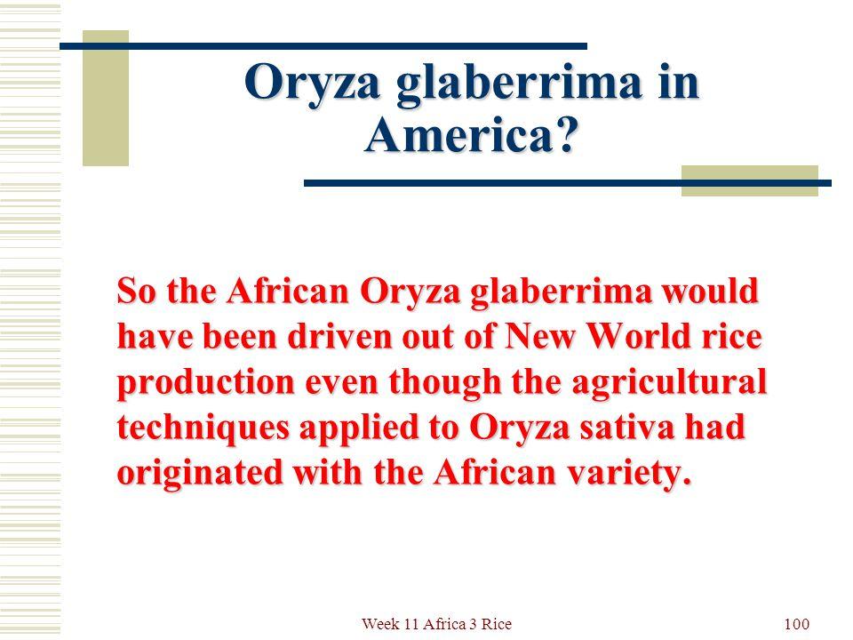 Oryza glaberrima in America.