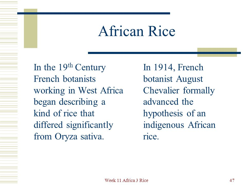 New Evidence on Rice In 2001, Judith Carney's book brought together evidence showing that an African rice variety was independently domesticated hundreds of years ago.