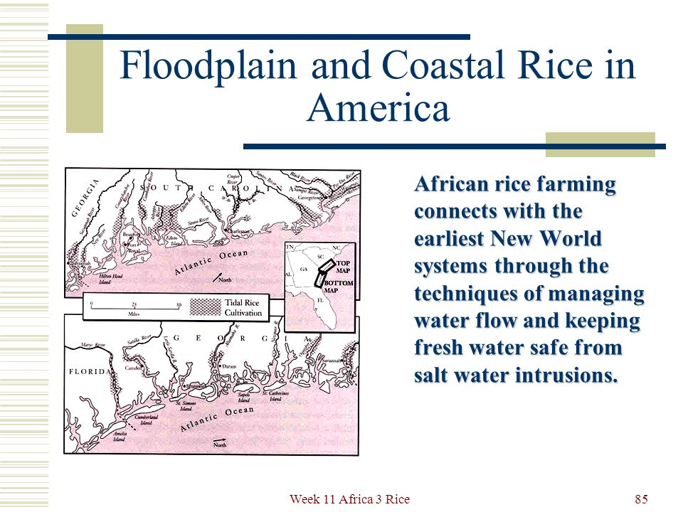 Floodplain and Coastal Rice in America European slave owners knew nothing about wet rice agriculture or irrigation systems yet they developed highly profitable rice plantations in Georgia and South Carolina in the 17 th and 18 th centuries.