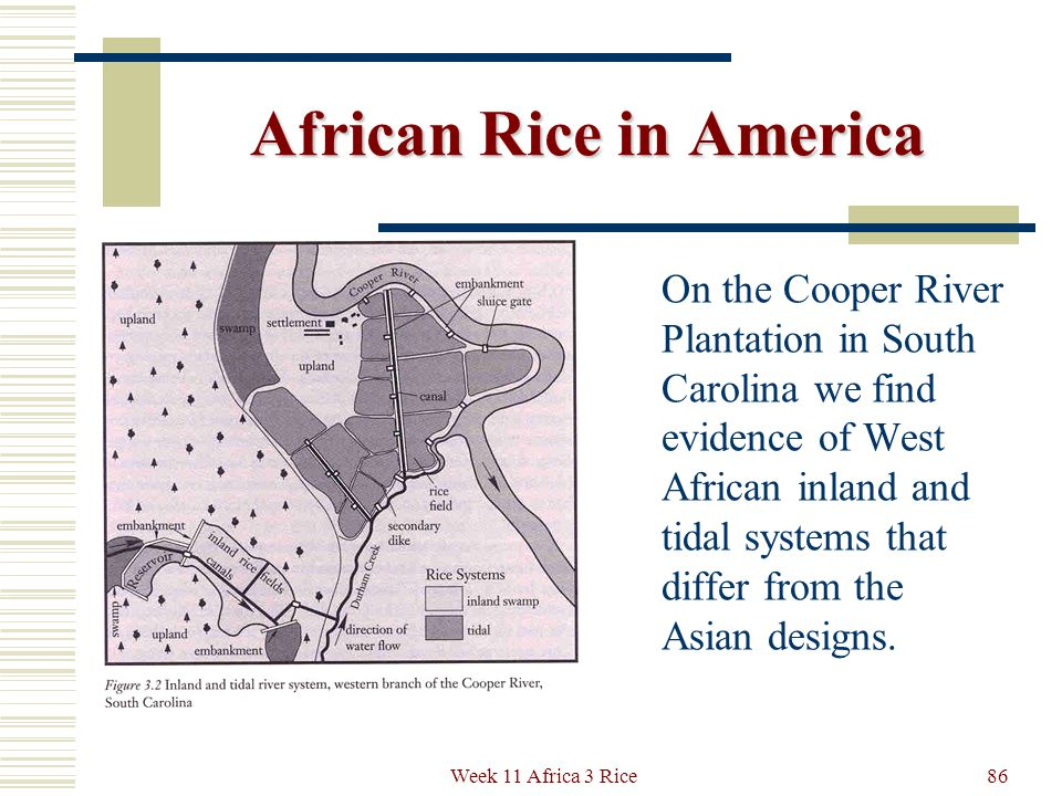 Floodplain and Coastal Rice in America African rice farming connects with the earliest New World systems through the techniques of managing water flow and keeping fresh water safe from salt water intrusions.