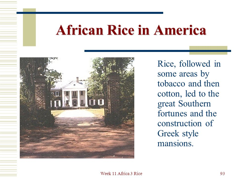 African Rice in America On the Boone Plantation in South Carolina we see modern remains of a similar irrigation layout.