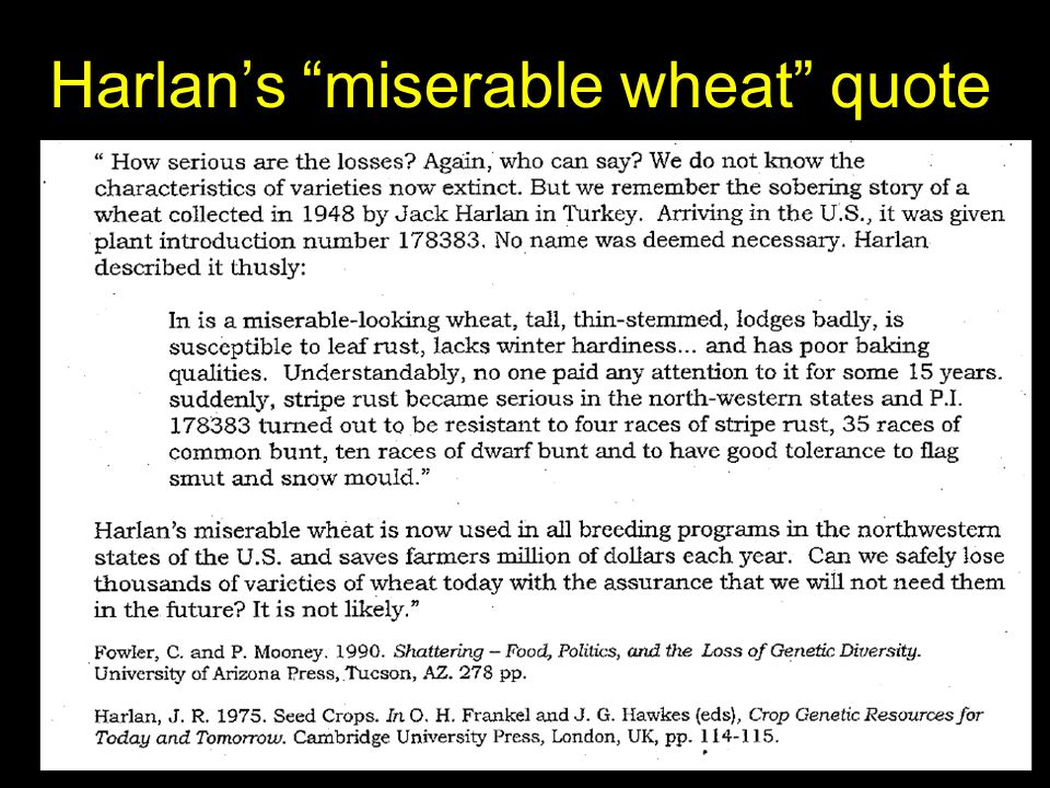 "Harlan's ""miserable wheat"" quote"
