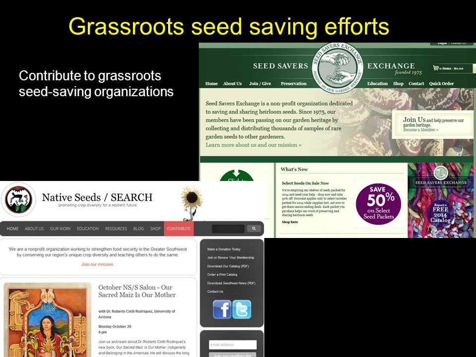 Grassroots seed saving efforts Contribute to grassroots seed-saving organizations