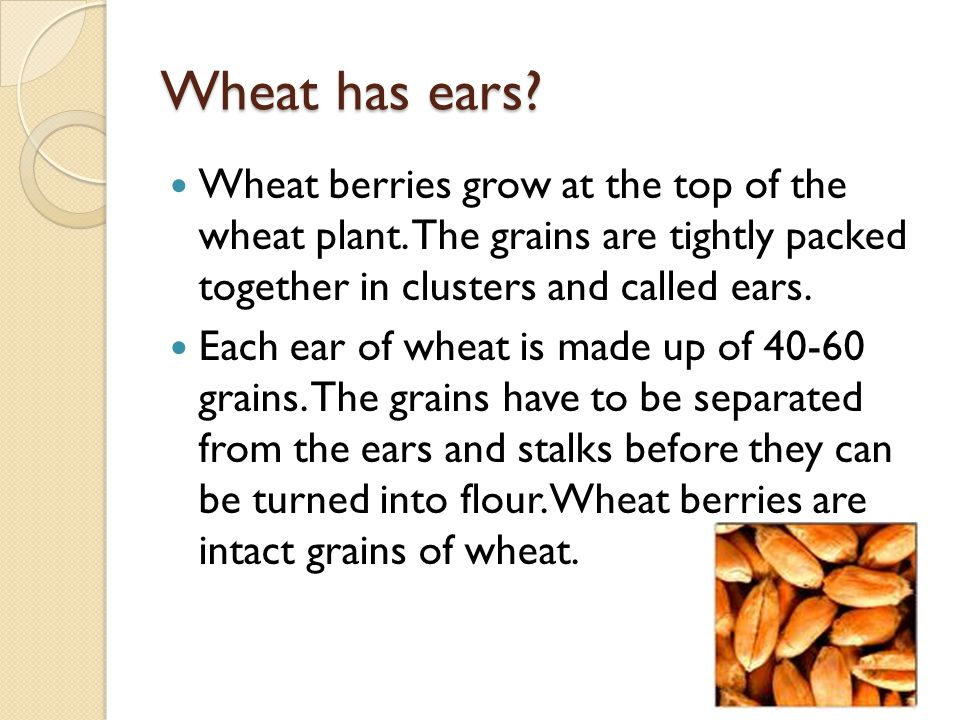 Parts of a grain Bran: outer shell that protects the seed.