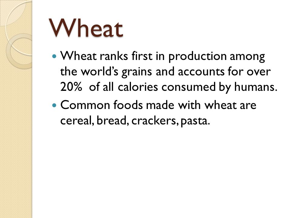 Wheat Wheat ranks first in production among the world's grains and accounts for over 20% of all calories consumed by humans. Common foods made with wh