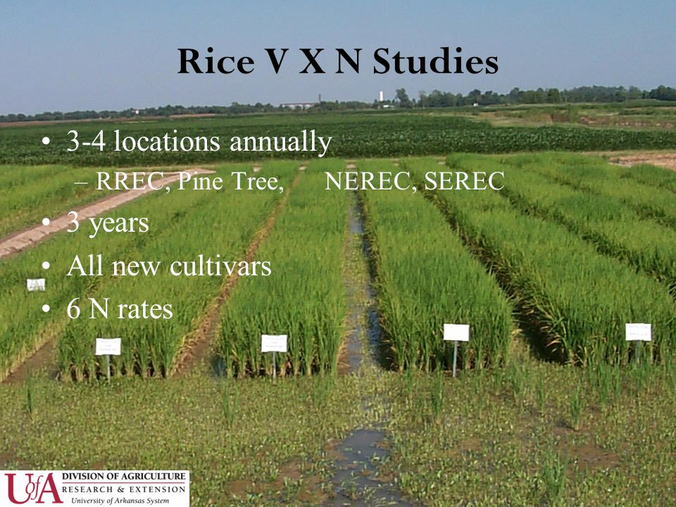Rice V X N Studies 3-4 locations annually –RREC, Pine Tree, NEREC, SEREC 3 years All new cultivars 6 N rates