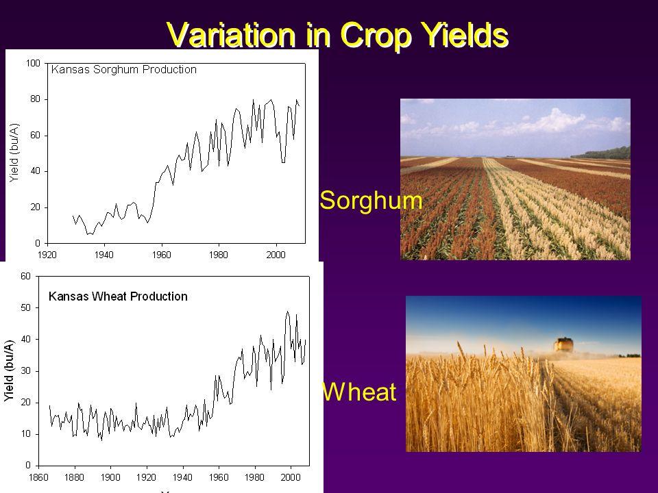 Variation in Crop Yields Sorghum Wheat