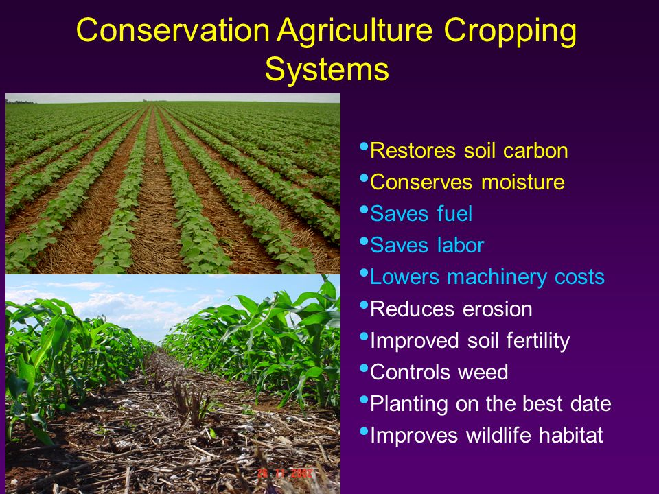 Conservation Agriculture Cropping Systems Restores soil carbon Conserves moisture Saves fuel Saves labor Lowers machinery costs Reduces erosion Improved soil fertility Controls weed Planting on the best date Improves wildlife habitat