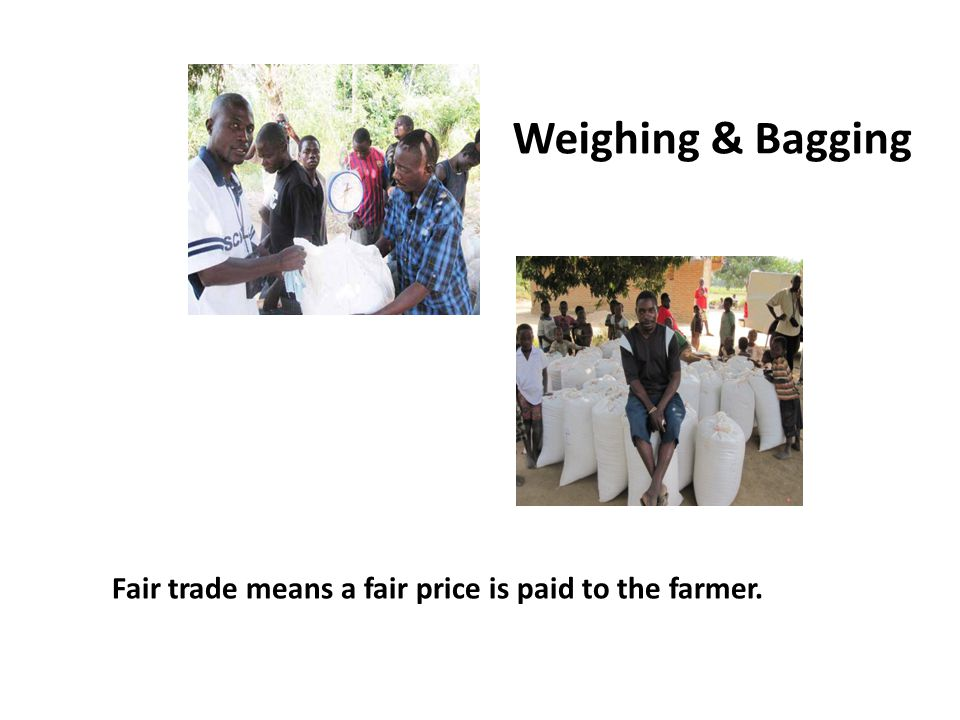 Weighing & Bagging Fair trade means a fair price is paid to the farmer.