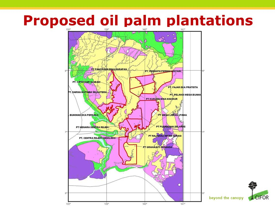 THINKING beyond the canopy Proposed oil palm plantations