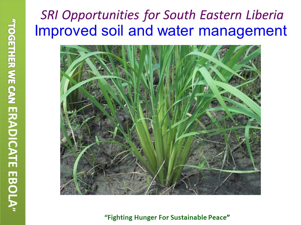Improved soil and water management SRI Opportunities for South Eastern Liberia Fighting Hunger For Sustainable Peace