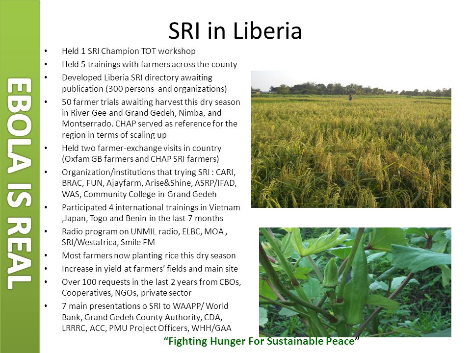 SRI in Liberia Held 1 SRI Champion TOT workshop Held 5 trainings with farmers across the county Developed Liberia SRI directory awaiting publication (300 persons and organizations) 50 farmer trials awaiting harvest this dry season in River Gee and Grand Gedeh, Nimba, and Montserrado.