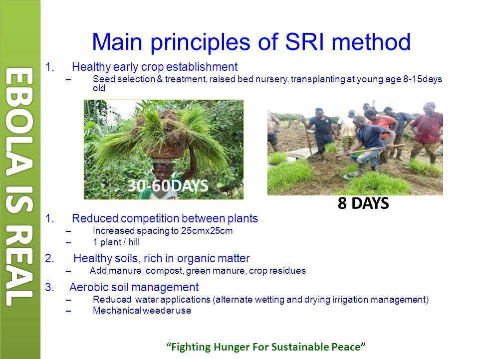 Shorter crop cycle (1-2 weeks) Improved drought tolerance Improve resistance to strong winds Costs/ha (reduction by 30%) Income increase/ha: +30-100% Promote group farming Summary of Benefits Fighting Hunger For Sustainable Peace