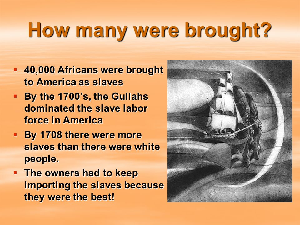 How many were brought?  40,000 Africans were brought to America as slaves  By the 1700's, the Gullahs dominated the slave labor force in America  B