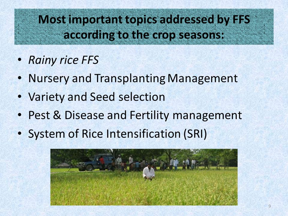 Most important topics addressed by FFS according to the crop seasons: Rainy rice FFS Nursery and Transplanting Management Variety and Seed selection Pest & Disease and Fertility management System of Rice Intensification (SRI) 9
