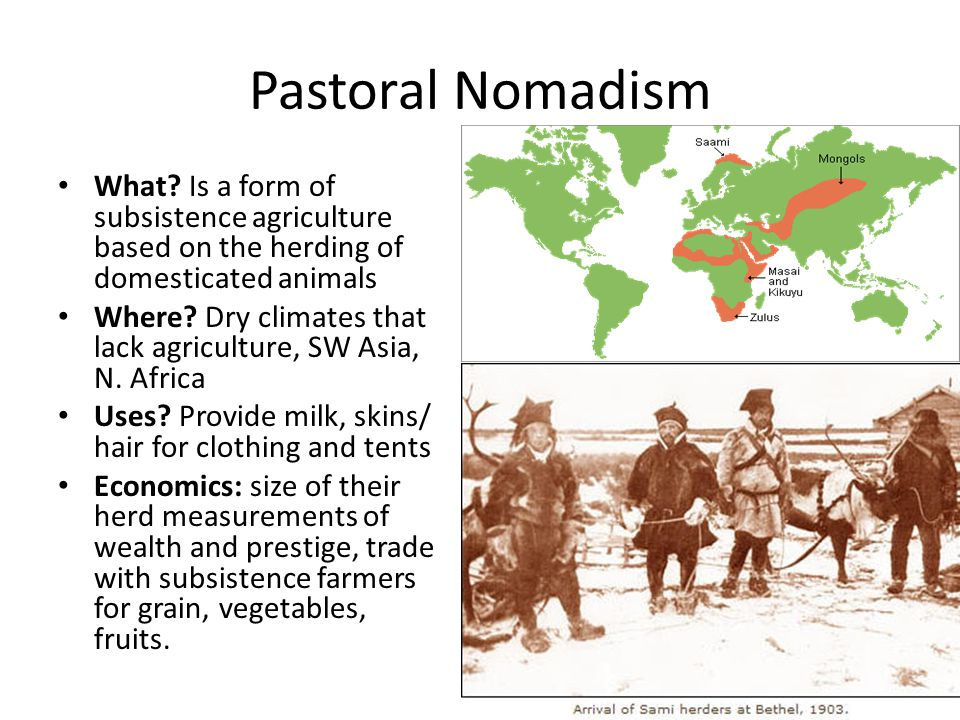 Pastoral Nomadism What? Is a form of subsistence agriculture based on the herding of domesticated animals Where? Dry climates that lack agriculture, S