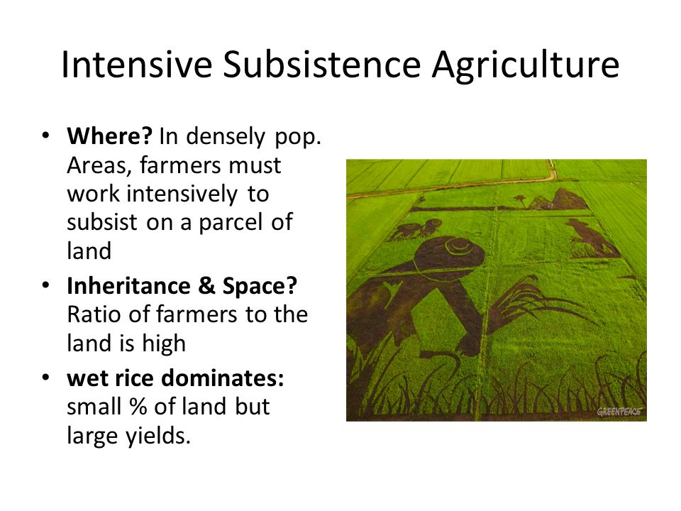 Intensive Subsistence Agriculture Where? In densely pop. Areas, farmers must work intensively to subsist on a parcel of land Inheritance & Space? Rati