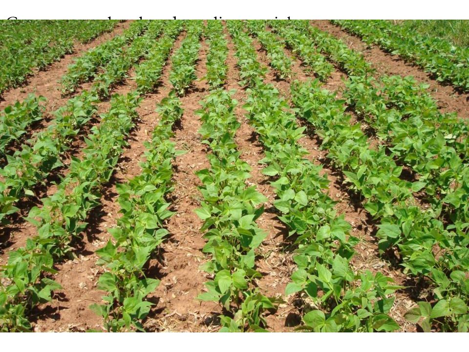 Crop research related to climate risk 1. Development of drought and heat tolerant varieties - cassava -Beans -Potatoes -Horticultural crops including