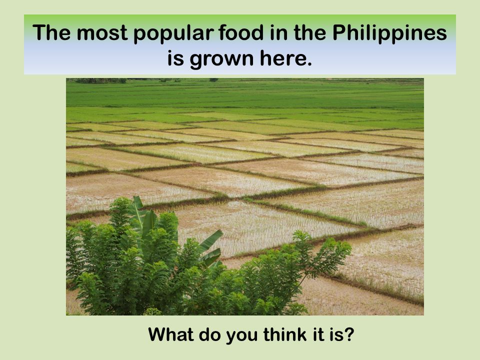 The most popular food in the Philippines is grown here. What do you think it is?