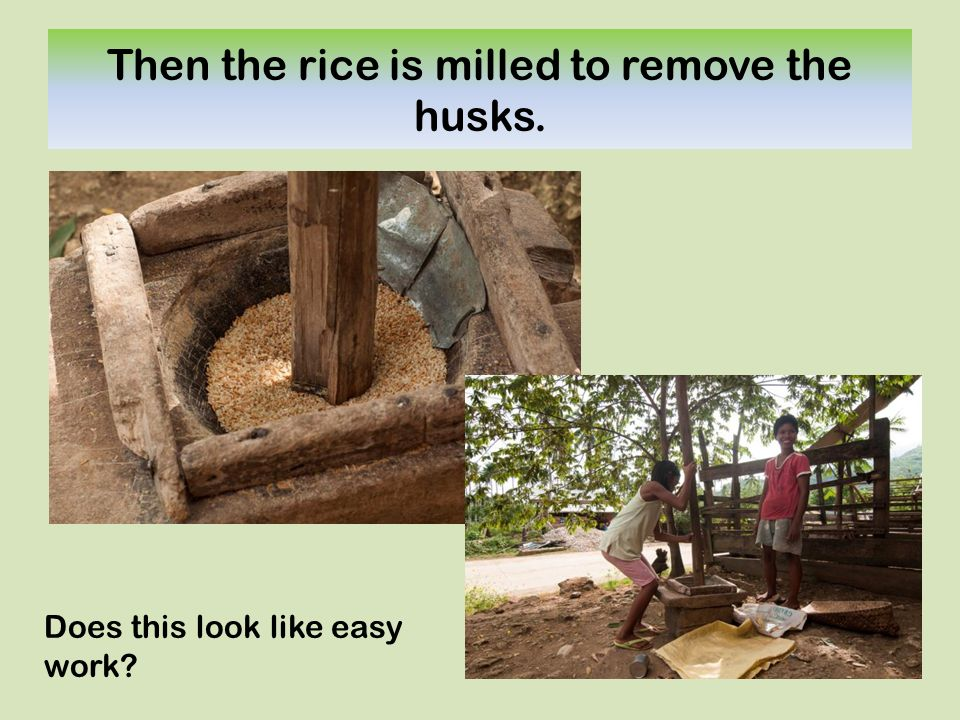 Then the rice is milled to remove the husks. Does this look like easy work