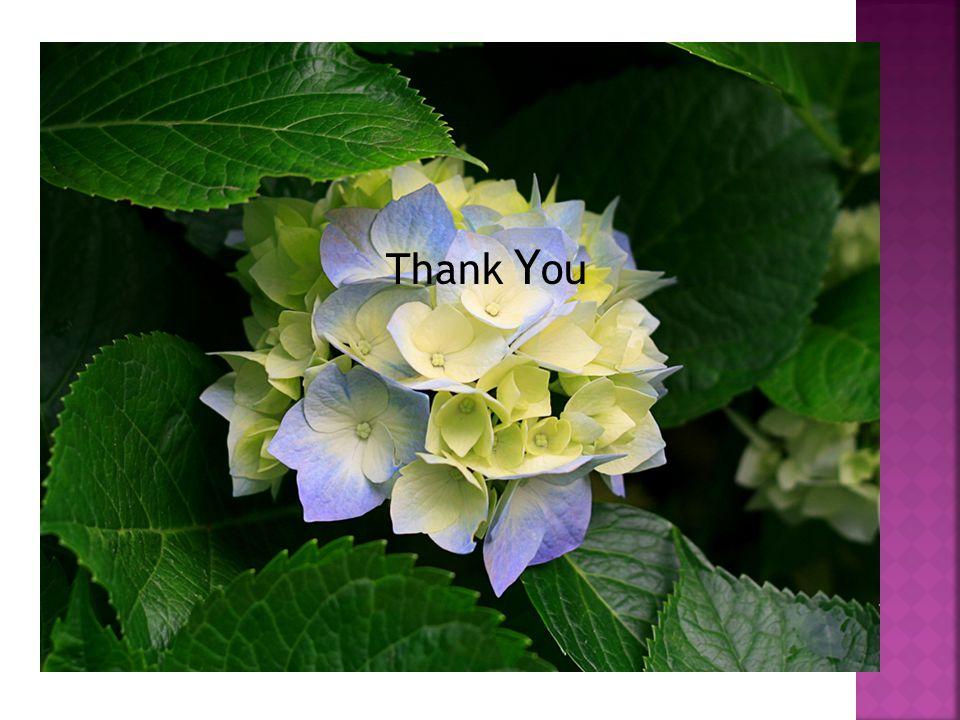 Thank Y ou