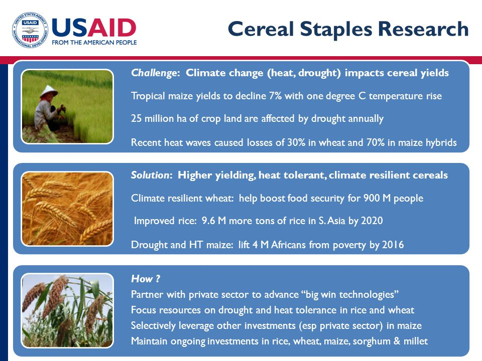 Big Idea 1: Climate Resilient Cereals Challenge: Climate change (heat, drought) impacts cereal yields Tropical maize yields to decline 7% with one deg