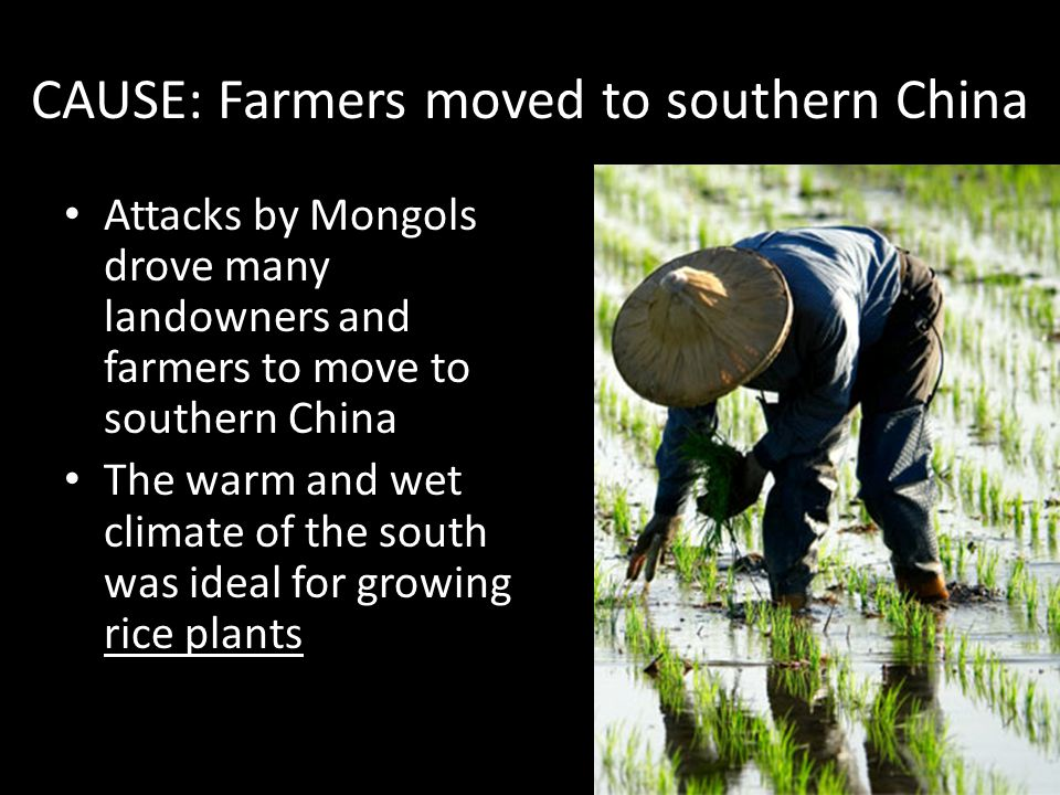 CAUSE: Farmers moved to southern China Attacks by Mongols drove many landowners and farmers to move to southern China The warm and wet climate of the south was ideal for growing rice plants